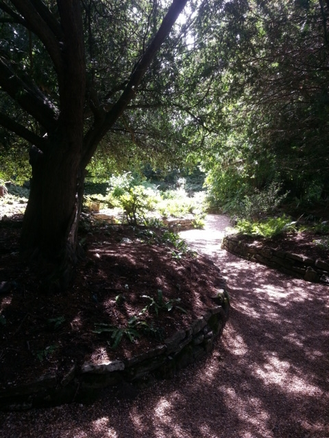 Kingston Lacey walk